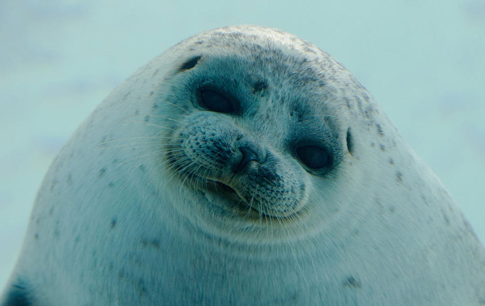 海の生き物と思い切り夏を楽しもう♡関東で人気の水族館を紹介!