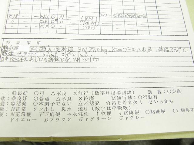 20100610niiya2.JPG