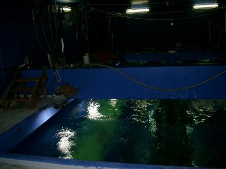 写真1 アクアゲート水槽バックヤードCIMG2386.JPG