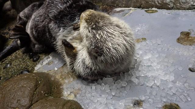 氷ごろん.JPG