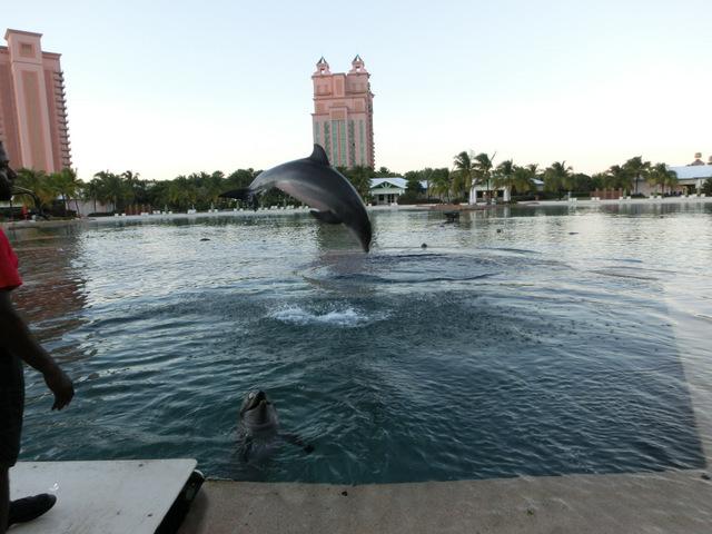 1-写真⑤ イルカとふれあい.JPG