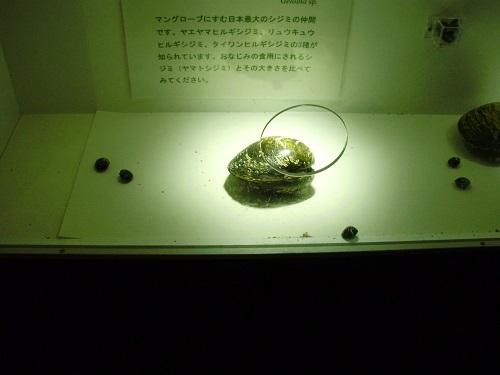 1409_shijimi_1.JPG