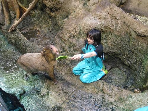 201504_capybara_1.jpg