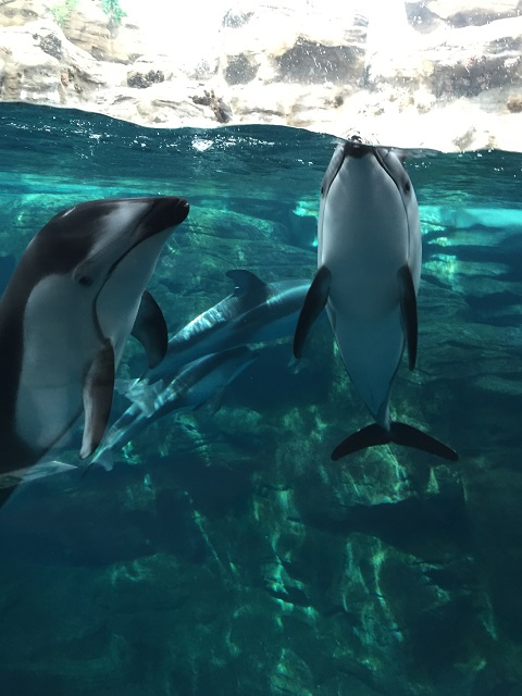 201506_dolphinm_1.jpg