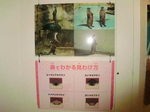 kawaomo写真2.JPG