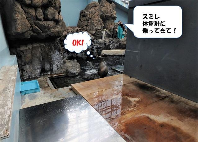 181107_syokuyokunoaki01.jpg