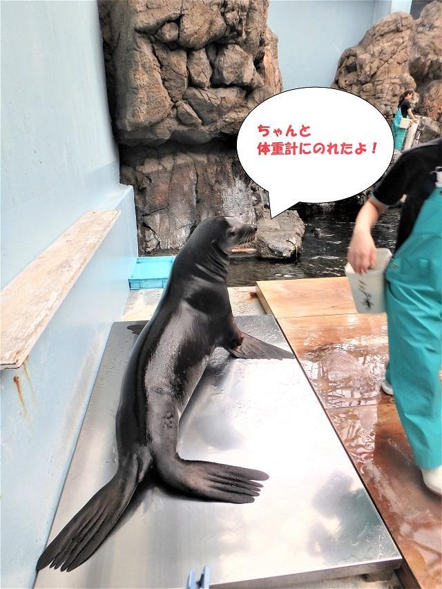 181107_syokuyokunoaki03.JPG