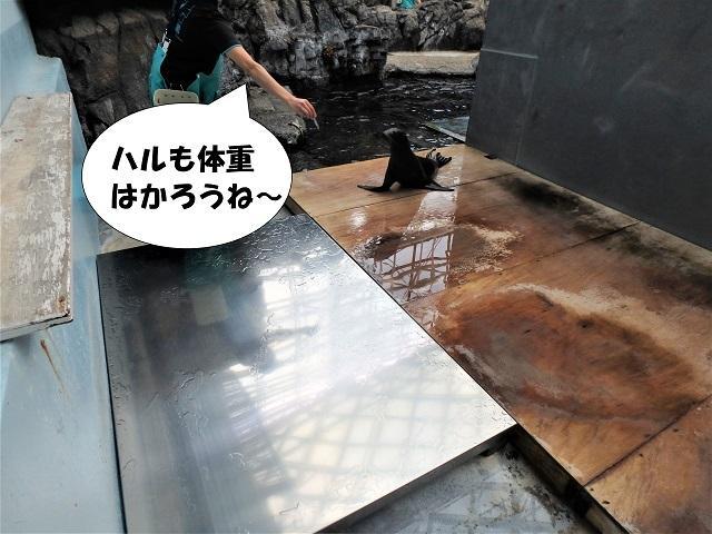 181107_syokuyokunoaki06.JPG