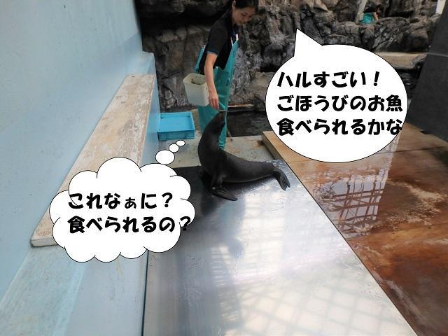 181107_syokuyokunoaki07.JPG
