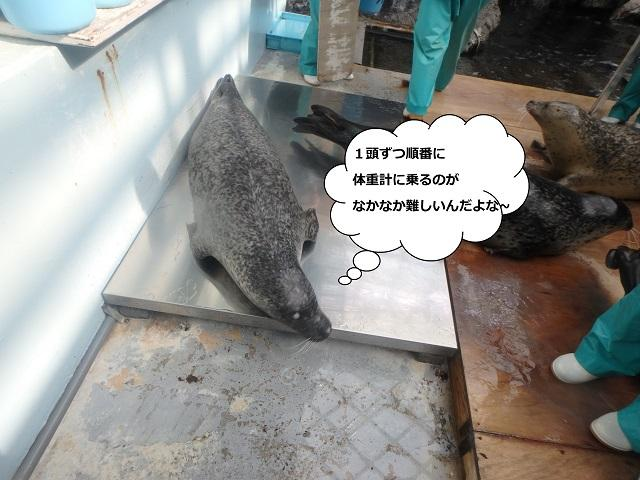 181107_syokuyokunoaki08.JPG