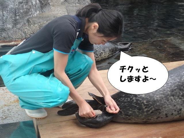 181107_syokuyokunoaki10.JPG