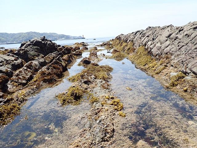 春といえば、磯の季節」|海遊館とつながる|海遊館