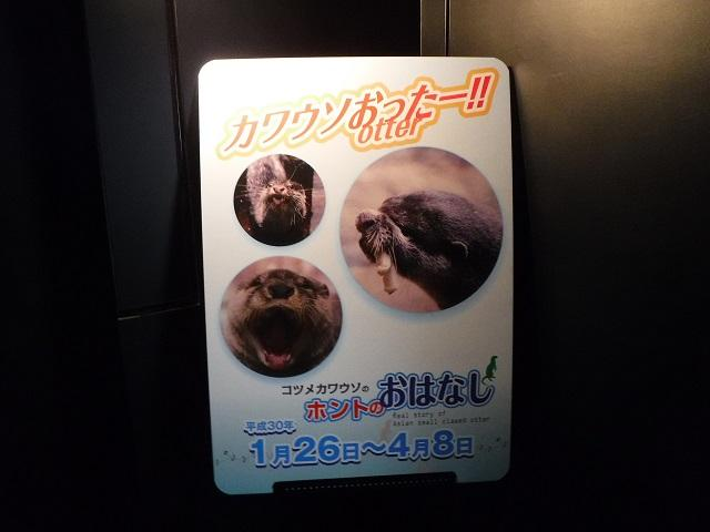 kawauso_otter_1.JPG