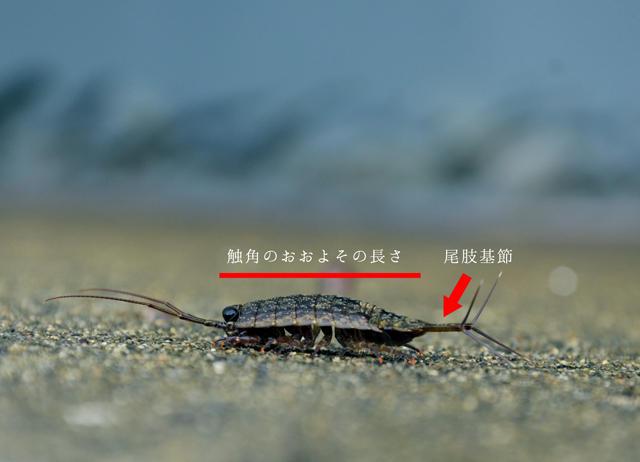 osakawan_2.jpg