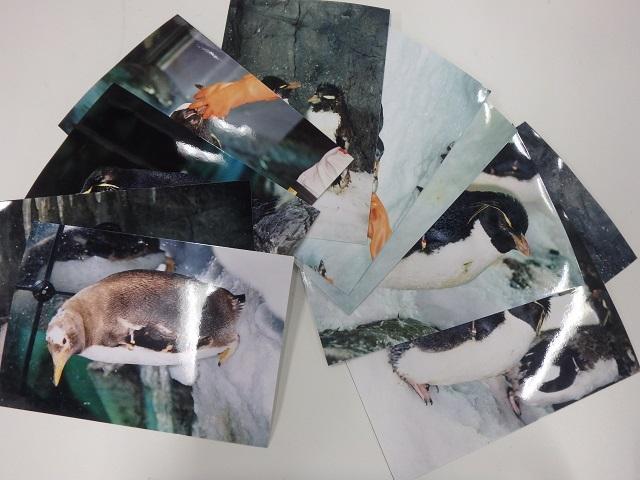 penguin_0711_1.JPG