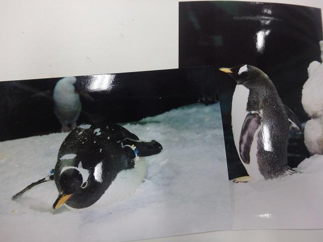 penguin_0711_2.JPG