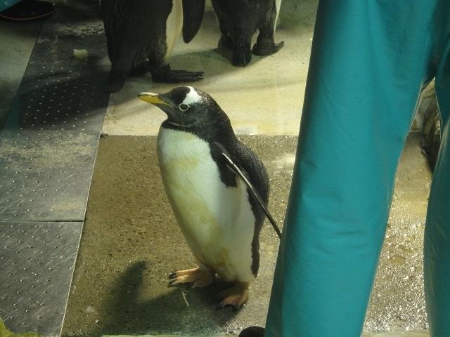 penguin_0711_3.JPG