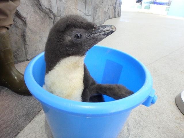 penguin_170708_3.JPG