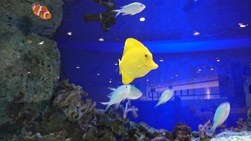 yellow170614_1.JPG