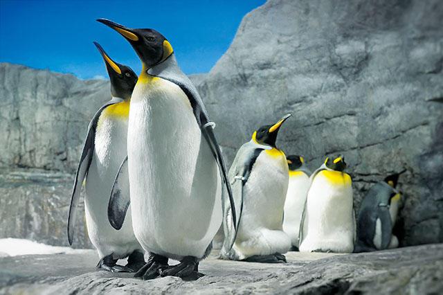 ot_penguin.jpg
