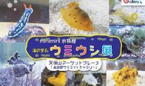 7/5まで延長します!海遊館サテライトギャラリーminimini水族館「海の宝石 ウミウシ展」開催中