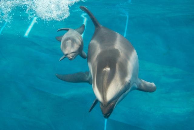 dolphin2014_1.jpg
