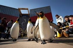 penguin_p.jpg