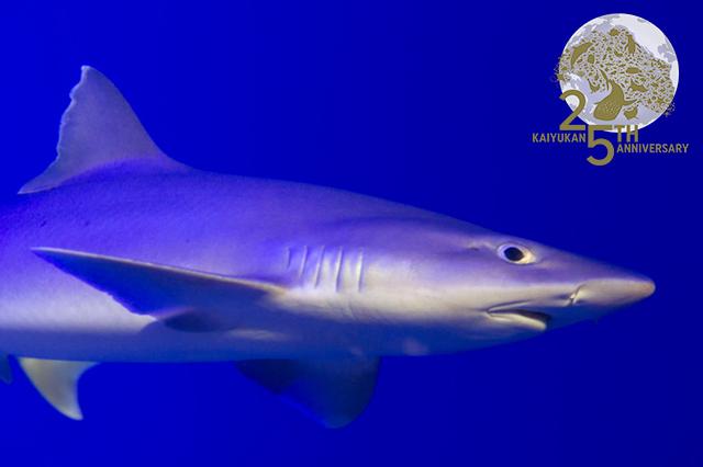 sharkgate25th_1.jpg