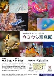 umiushi_chirashi.jpg